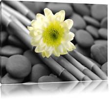 Blüte auf Bambus schwarz/weiß Leinwandbild Wanddeko Kunstdruck