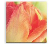 Naturfotografie –  Rot orange Tulpe auf Leinwand