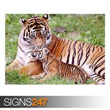 Tiger y bebé animal TIGRE (3472) - Foto Poster Print Arte Cartel * Todos los Tamaños