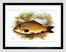 La pittura di animali Pesce Carpa Lydon Nero Framed Art Print b12x12761