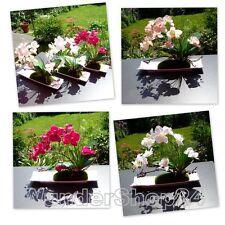 Orchidee Deluxe Kunstblumen Seidenblumen Kunstpflanzen künstliche Deko Blumen