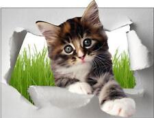 Sticker trompe l'oeil animal Chat 60x46cm
