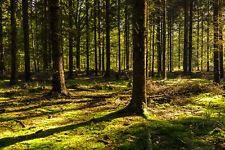 Fototapete Selbstklebend Wald Magisch Märchenwald - Made in Germany - Tapete