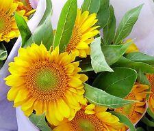 Gumpaste Cutters Sets By Sunflower Sugar Art