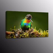 Animals Bird Wall Art Decor Parrots Canvas Print Art Painting Picture Home Decor