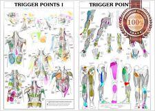 NEW TRIGGER POINTS 1 & 2 ANATOMICAL DIAGRAM CHART ANATOMY PRINT PREMIUM POSTER