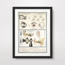 EYES EARS VINTAGE MEDICAL SCIENTIFIC ART PRINT Poster Wall Chart Illustration