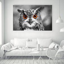 Owl Art Black White Paint Vintage Silk Canvas Poster Wall Decor Unframed A513