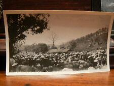 photo amateur 1929 laos dong danh le marché aux buffles bestiaux