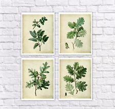 Farmhouse Decor set of 4 unframed art prints vintage botanical art oak leaves