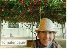 Tomatenbaum Tamarillo bis 7 Meter hoch, Zimmerpflanze oder Kübelpflanze