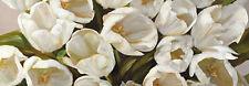 Leonardo Sanna : Tulipani BIANCHI bastidor de cuña - Imagen Lienzo Blanco Flores