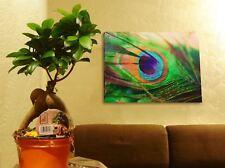 1 BONSAI FICUS GINSENG GENSENG INDOOR TREE IN POT RARE SPECIES GARDENING PLANT