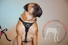 Pettorina per cani medi e grandi, pelle naturale, confortevole, molto resistente