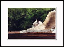 """The Stretch"" - Birman Framed Ltd. Ed. Cat Art by Print Drew Strouble Catmandrew"