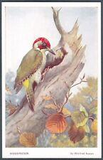 BIRD 02 UCCELLINO Ill. WINIFRED AUSTEN - VALENTINE Cartolina