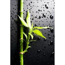 Stickers muraux déco : bambou 1363