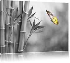schöner Schmetterling vor Bambus schwarz/weiß Leinwandbild Wanddeko Kunstdruck