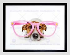 Jack russell chien comédie pink glasse noir encadré art imprimé photo B12X9054