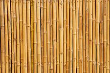 Fototapete Bambus Wand Bambuswand - Kleistertapete oder Selbstklebende Tapete