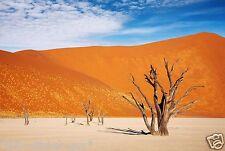 """Reptile Habitat, Terrarium Background, Orange Desert  21"""" x ____ Various Lengths"""