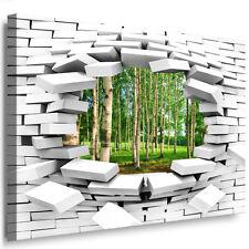 Leinwandbild XXL Bilder Fertigbild ! Wandbild Wandloch Fotomotiv Birken wald 142