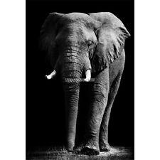 Wandaufkleber Deko: Elefanten 1696