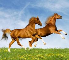 3D Running Horses 1 Wall Paper Wall Print Decal Wall Deco Indoor Wall Murals