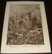 PHOTO 1930-1936 FRANCE COLONIES MADAGASCAR LA COUPE DES PALMES DE RAPHA