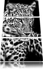 Leopard mit blauen Augen 3-Teiler Leinwandbild Wanddeko Kunstdruck