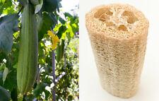 LUFFA SPONGE 10-100 SEEDS Gourd Loofah Dishcloth Very Productive Mướp Heirloom