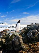 Penguin Antarctica Landscape Nature Giant Wall Print POSTER