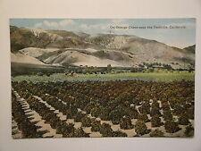 1921-ORANGE GROVE NEAR THE FOOTHILLS,CALIFORNIA.(13 STAR FLAG CANCEL)