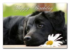 C302; gran tarjeta de cumpleaños personalizada; hecho a medida para cualquier nombre; Negro Cachorro de laboratorio