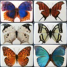 1 Kühlschrankmagnet Schmetterling Kühlschrankmagnete Magnete Magnet Falter neu