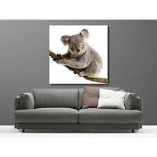 Tableaux toile déco carré koala 3268537