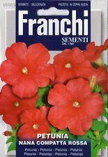 100 Semi/Seeds PETUNIA Nana Compatta Rossa