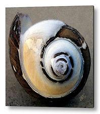 Seashells No 3 Large Pastel Color Fine Art Print on Metal or Acrylic