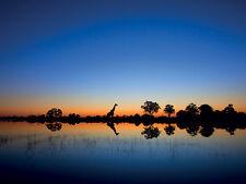 Mario Moreno africano vida silvestre & paisaje fotografías de Lona Impresiones Amplia Gama