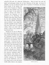 Lüneburg Ansicht von St. Johannis schöner HOLZSTICH um 1880