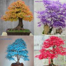 20pcs Semillas 4 Plantas Color de las hojas de arce japonés  maceta Bonsai Tree