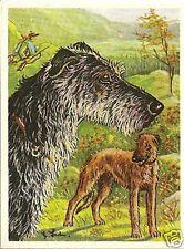 Rare 1952 Dog Art Print Card Austria Tobacco Company Bildwerk SCOTTISH DEERHOUND
