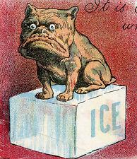 1909 AMERICAN PITBULL POSTCARD MILAN YPSILANTI MI COLD ONE ICE CUBE SEARS CORWIN