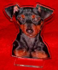 statuette photosculptée chien pinsher 6 dog hund estatua perro