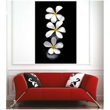 Affiche poster pétale de fleur  35636089