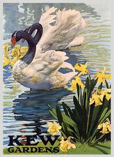 London Kew Gardens Swan Goose England Europe Vintage Poster Repro FREE SH
