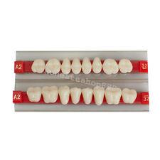G32 A2 Posterior Teeth Acrylic Synthetic Resin Denture Dental Teeth Shade Back