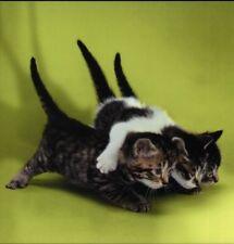 Postkarte, quadratisch: drei Freunde - niedliche Katzen