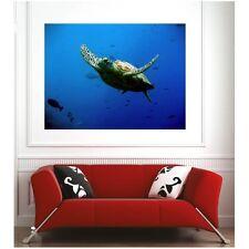 poster poster tartaruga marina 15095641 Art déco Adesivi