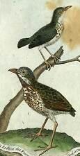 Oiseau de martinet FOURMILLIERS et BEFFROI de Cayenne